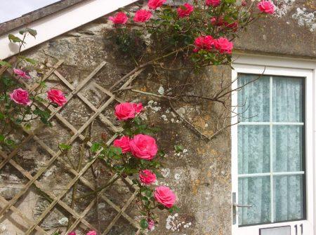 Flat 11 Trevarthian House Roses
